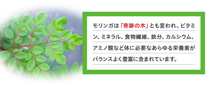 モリンガは奇跡の木とも言われ、ビタミン、ミネラル、食物繊維、鉄分、カルシウム、アミノ酸など体に必要なあらゆる栄養素がバランスよく豊富に含まれています。