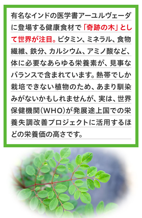 有名なインドの医学書アーユルヴェーダに登場する健康食材で「奇跡の木」として世界が注目。ビタミン、ミネラル、食物繊維、鉄分、カルシウム、アミノ酸など、体に必要なあらゆる栄養素が、見事なバランスで含まれています。熱帯でしか栽培できない植物のため、あまり馴染みがないかもしれませんが、実は、世界保健機関(WHO)が発展途上国での栄養失調改善プロジェクトに活用するほどの栄養価の高さです。